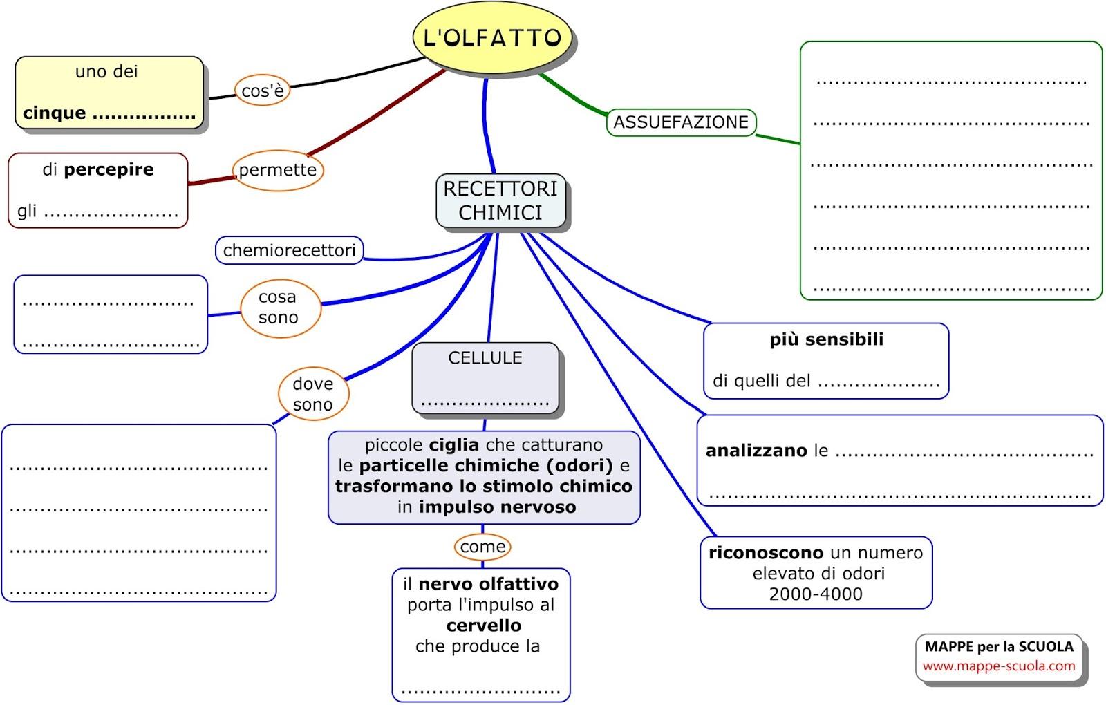 Preferenza MAPPE per la SCUOLA: L'OLFATTO CH72
