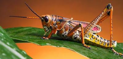 Soal Biologi  : Animalia Invertebrata & Kunci Jawaban (50 Pilgan)