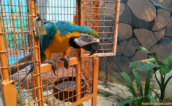 Anak-Anak Berseronok di Bird's Paradise Pulau Langkawi