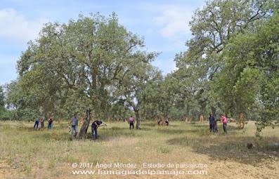 saca del corcho, alcornoque, quercus suber, corteza árboles, tapones corcho, San Vicente de Alcántara