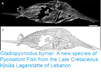 http://sciencythoughts.blogspot.co.uk/2016/07/gladiopycnodus-byrnei-new-species-of.html