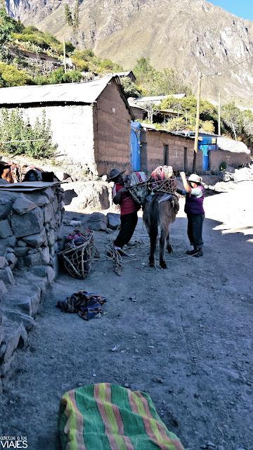 Vida rural en el Cañón del Colca