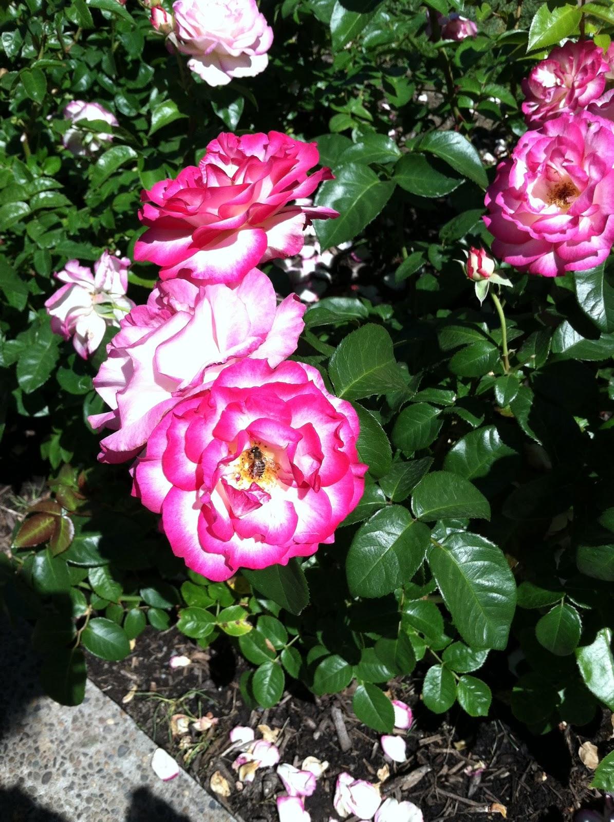 radish roses how to make