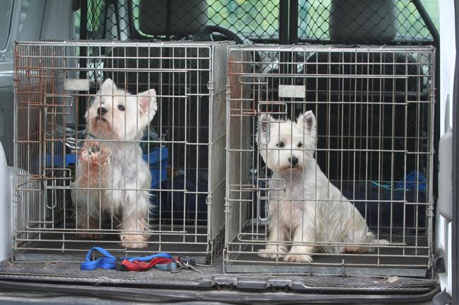 Wolontariat w schronisku dla zwierząt