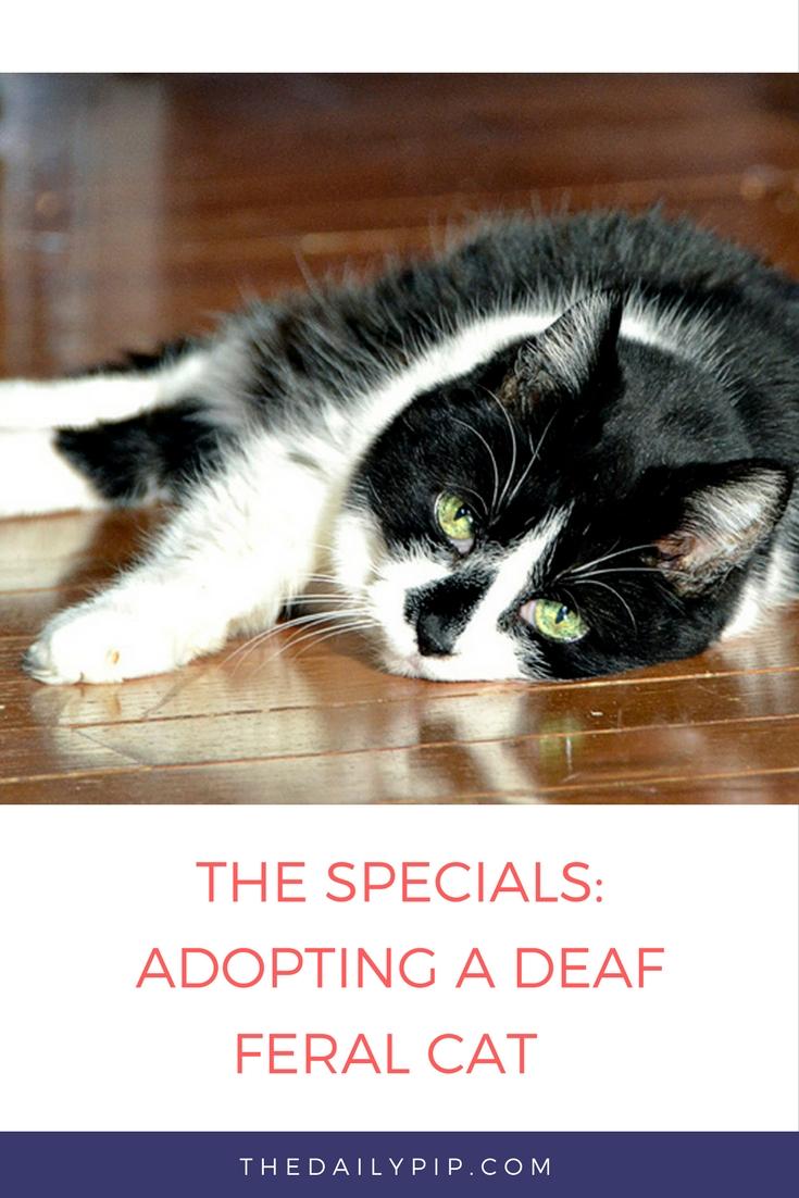 The Specials Adopting A Deaf Feral Cat