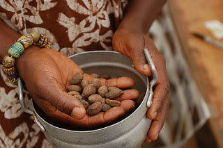 The nuts of shea tree can be collected and processed by crushing and grinding by hand or a machine to yield shea butter.
