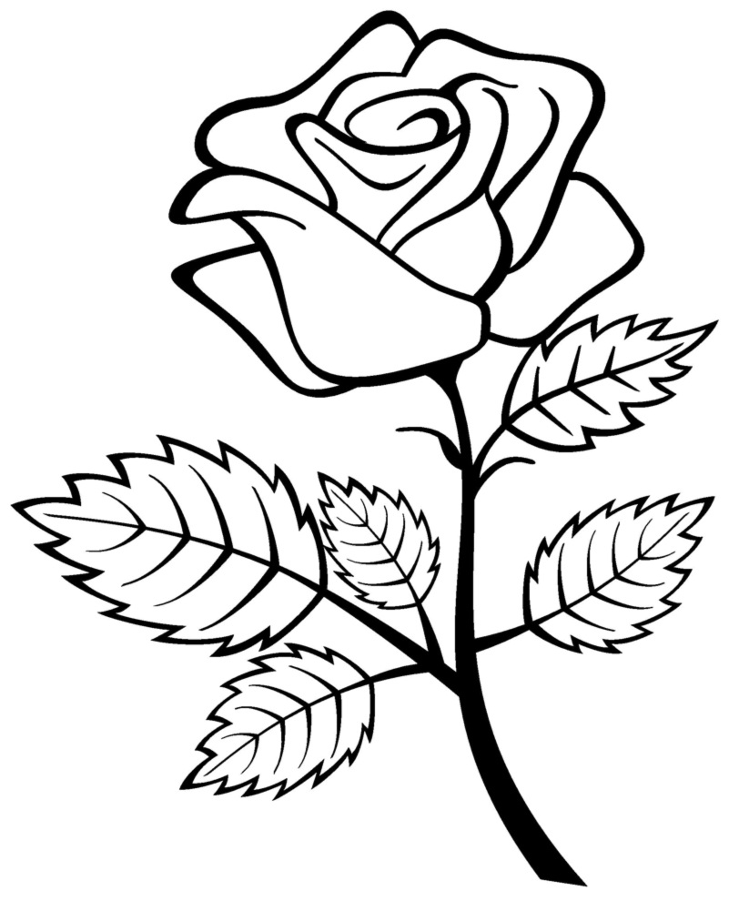 Dessins et Coloriages: Page de coloriage grand format à imprimer : une rose avec son feuillage