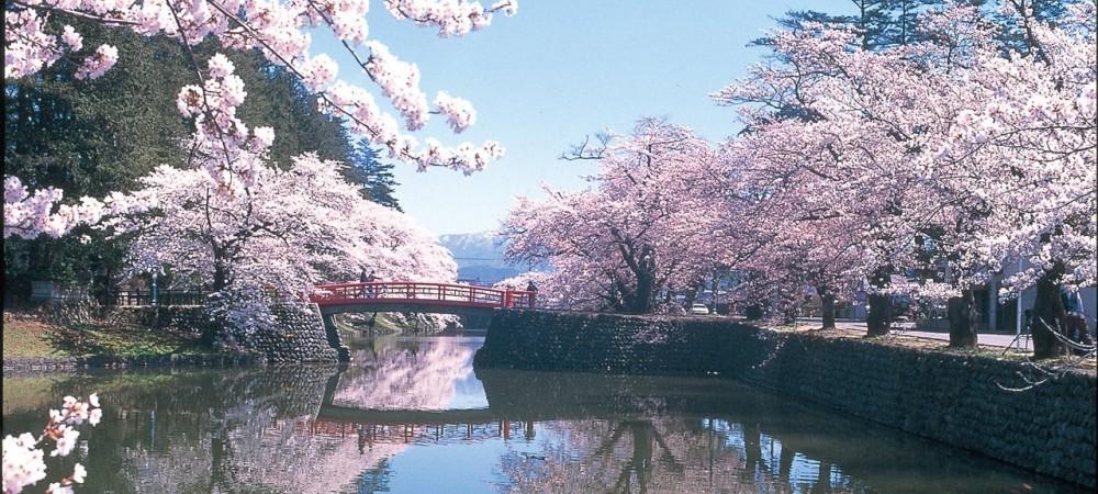 Japonya'da Sakuralar ve Anlamları