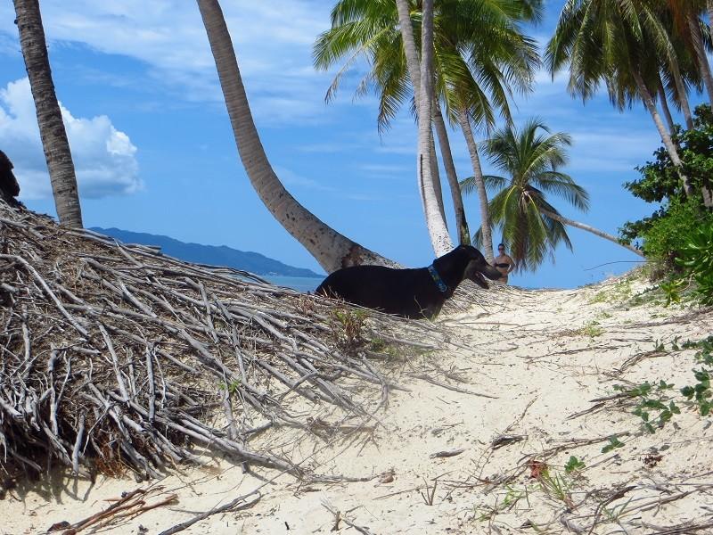 Собака стоит за корнями пальмы