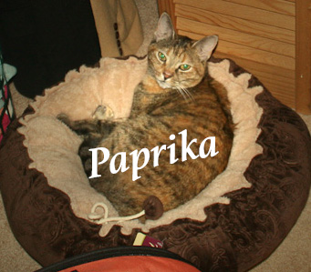 peaches and paprika renovation cats last day. Black Bedroom Furniture Sets. Home Design Ideas