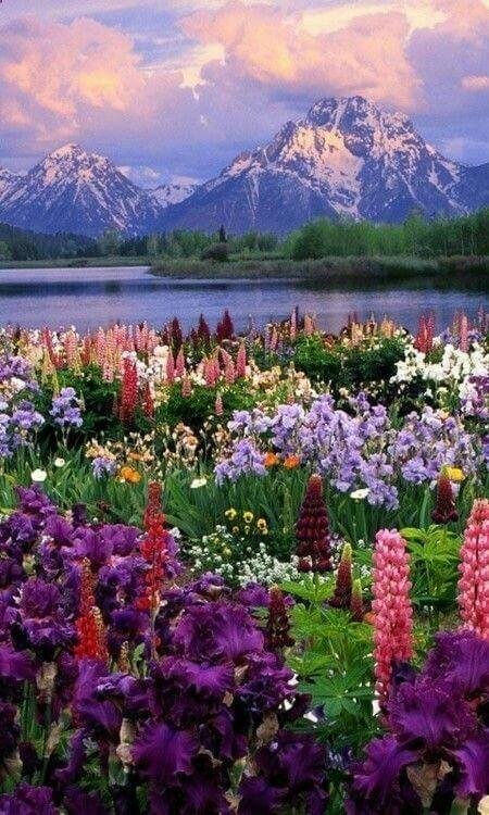 Wildflower Heaven, Grand Teton National Park, Wyoming, USA