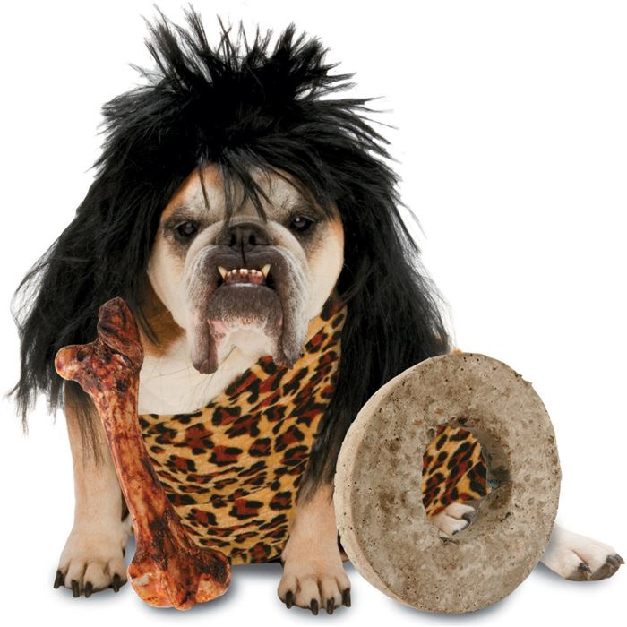 Easy Halloween Express Costumes For Dogs