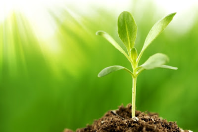 kebutuhan sinar matahari tanaman hidroponik