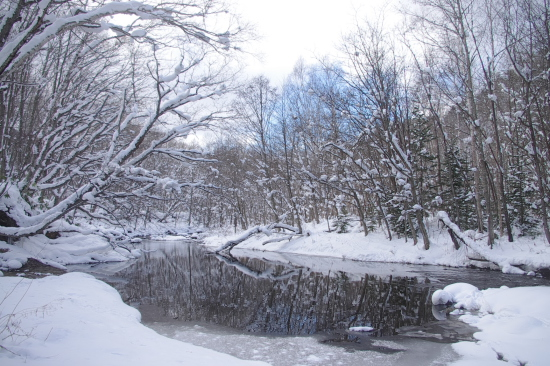 雪が積もった渓流