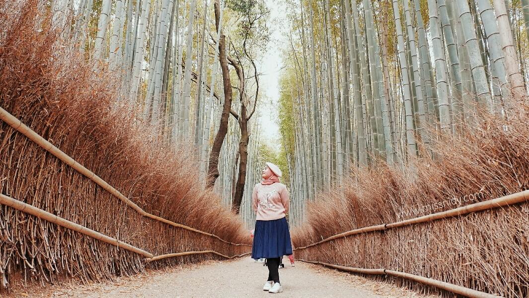 arashiyama bamboo groove