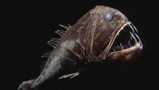fangtooth, deep sea animal gene patents