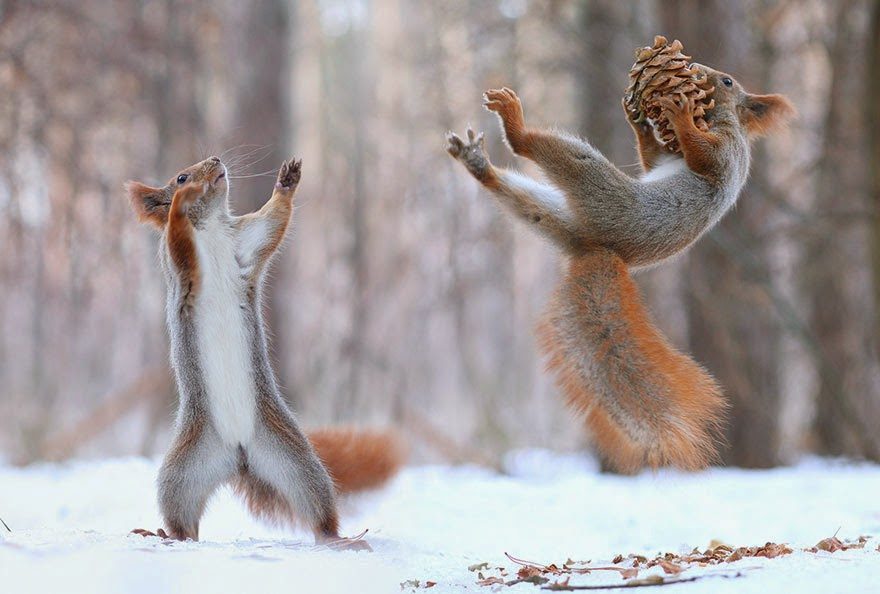 adorable squirrel photos vadim trunov-4