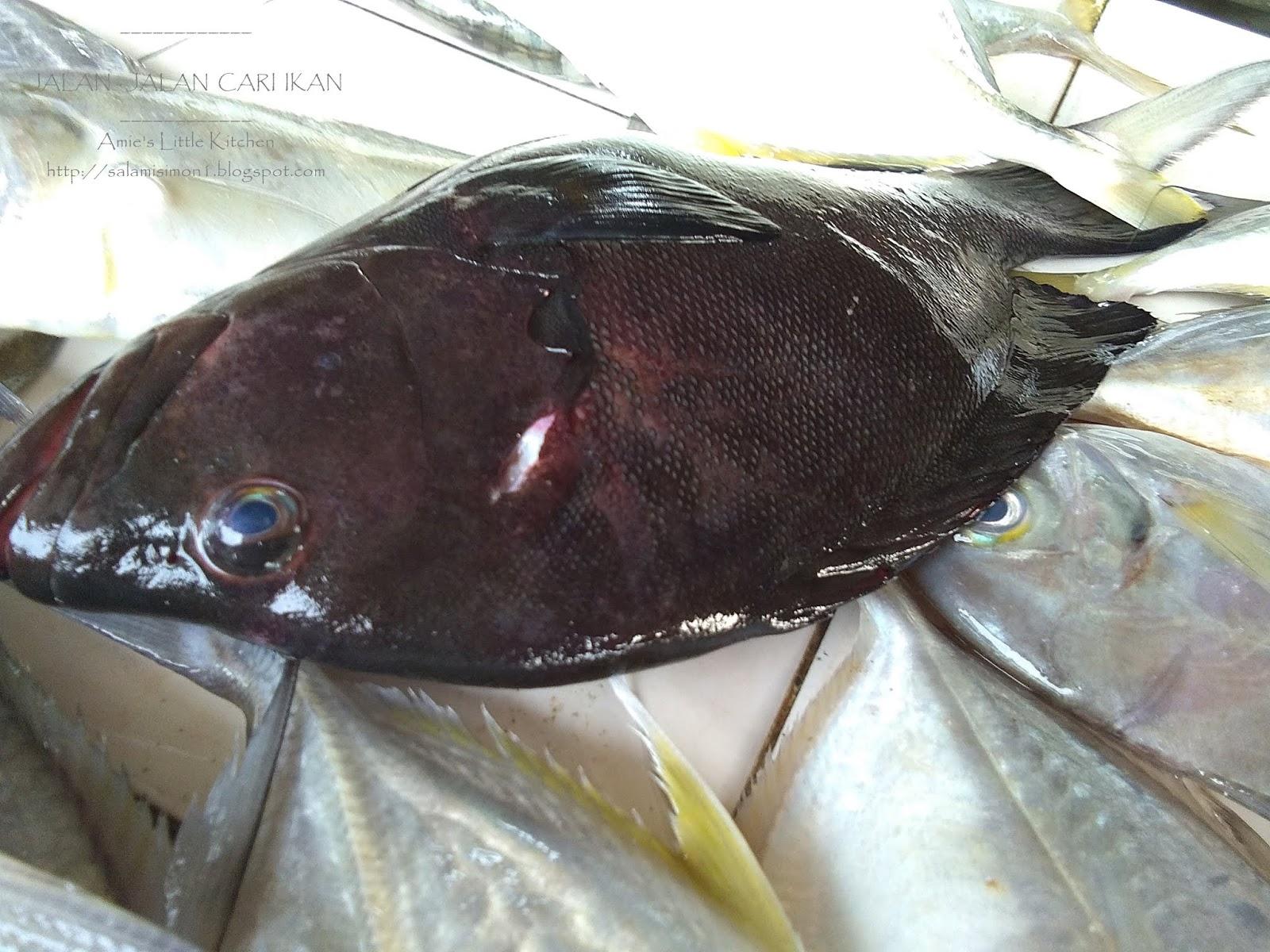 Amie S Little Kitchen Kenali Pelbagai Jenis Ikan Di Pantai Timur Sabah