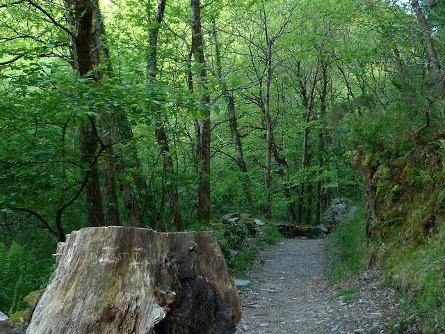 Bosque Cascada Salgueria - Taramundi