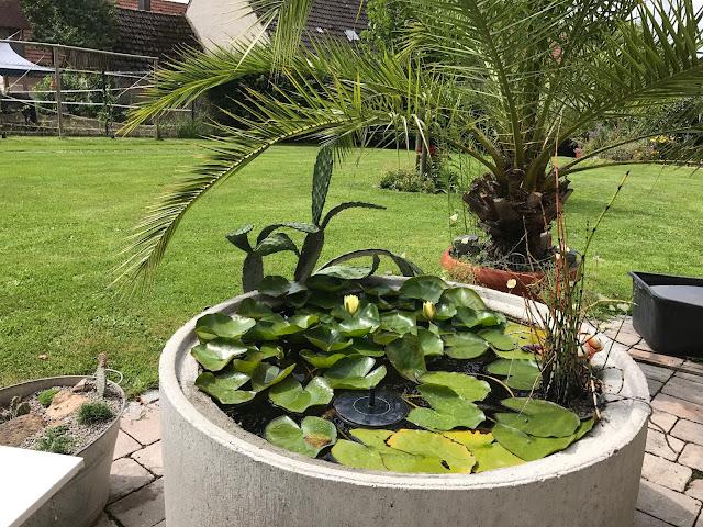 Seerosenbecken mit angelehnter Opuntie und großer Palme (c) by Joachim Wenk