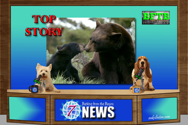 BFTB NETWoof News top story on bears in a backyard