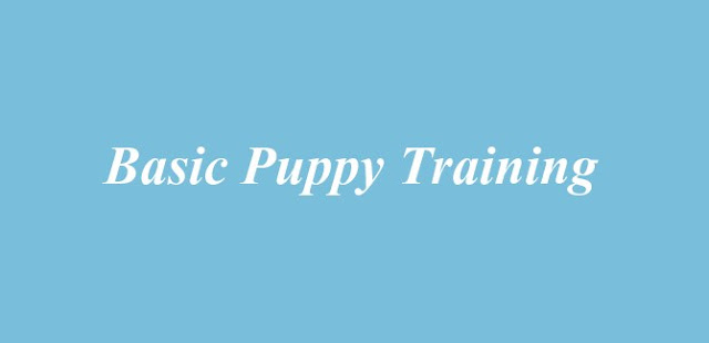 Basic Puppy Training