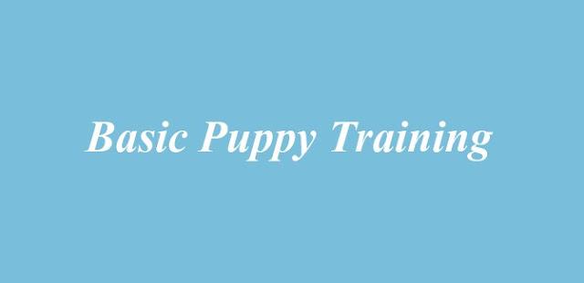 Basic Puppy Training