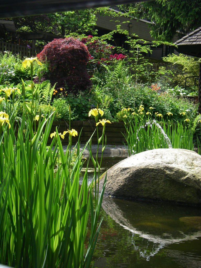Planting Around Pond Suggestions