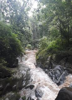 Paso del Mango, Masinga, near the city of Santa Marta, Colombia.