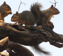 Picture of baby squirrels by Darla Sue Dollman