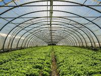 Kegunaan Plastik UV Untuk Greenhouse Sangatlah Melimpah