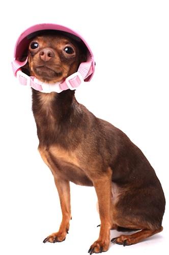 Leyendas mascotas y algo mas cascos para perros for Accesorios para mascotas