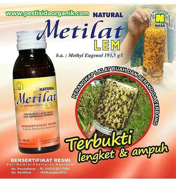 metilat nasa lem lalat buah serangga pestisida alami