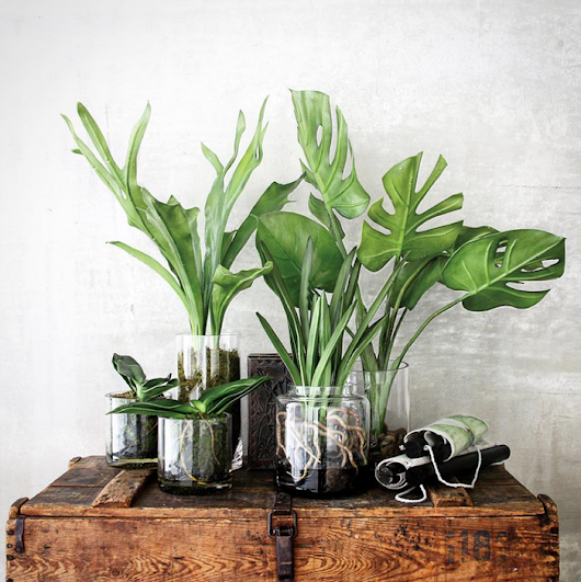 Clear Vessels + See-Through Botanicals