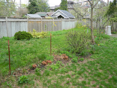 Riverdale Spring Cleanup Backyard Garden Before by Paul Jung Gardening Services--a Toronto Gardening Company