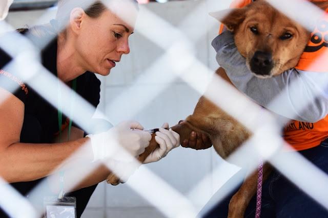 Trong thời gian tới, tổ chức này sẽ triển khai các hoạt động bảo vệ và tiêm phòng cho chó mèo tại Việt Nam.