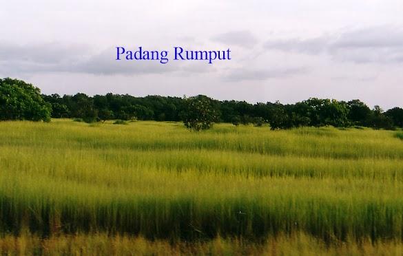 Pengertian Padang Rumput dan Hewan Tumbuhan yang hidup