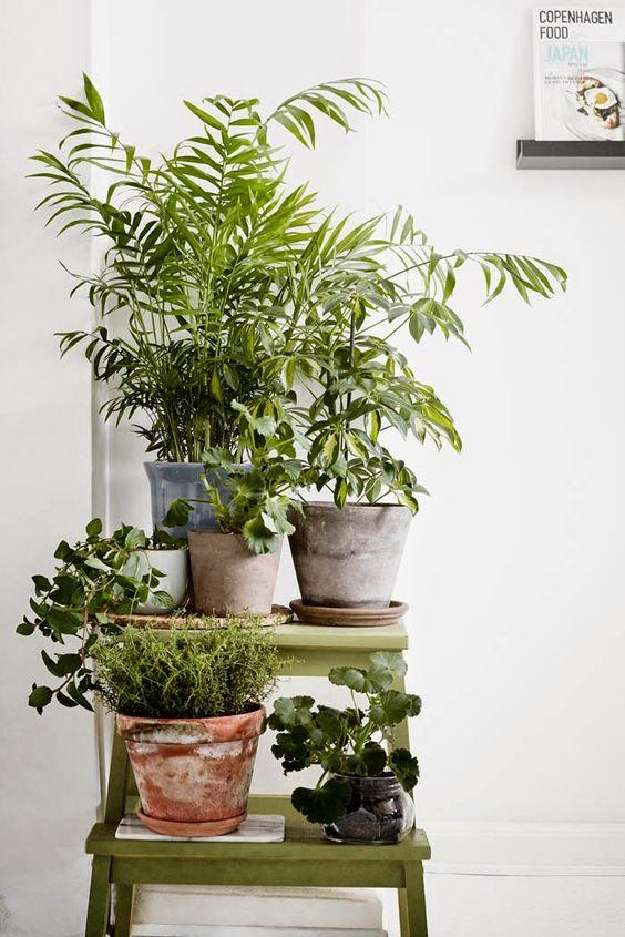 Cantinho Verde Ideias Para Ter Plantas Dentro De Casa