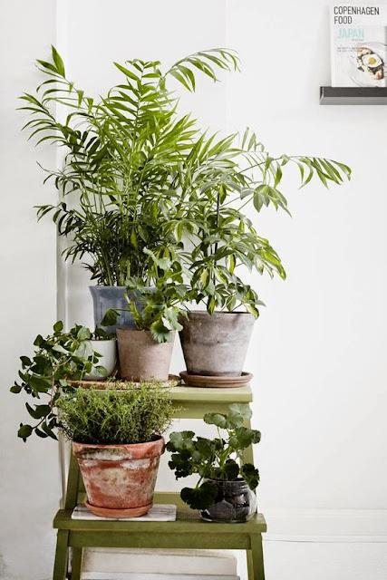 plantas-em-casa-inspirações