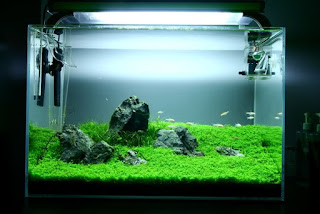 Lighting Aquascape