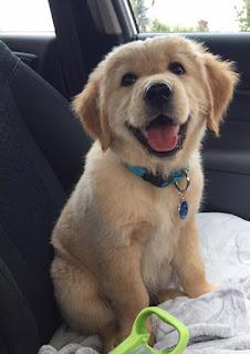 https://www.puppyspot.com/