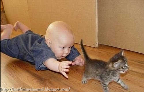 Funny baby and kitten.