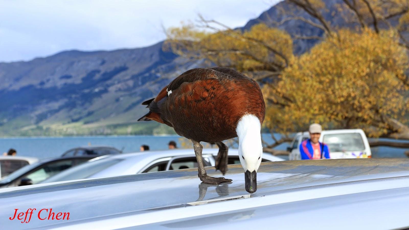 Jeff Chen登山旅遊攝影Blog --行觀坐看集: 紐西蘭南島中部秋天14日登山旅遊--Queenstown & Glenorchy (J--004)