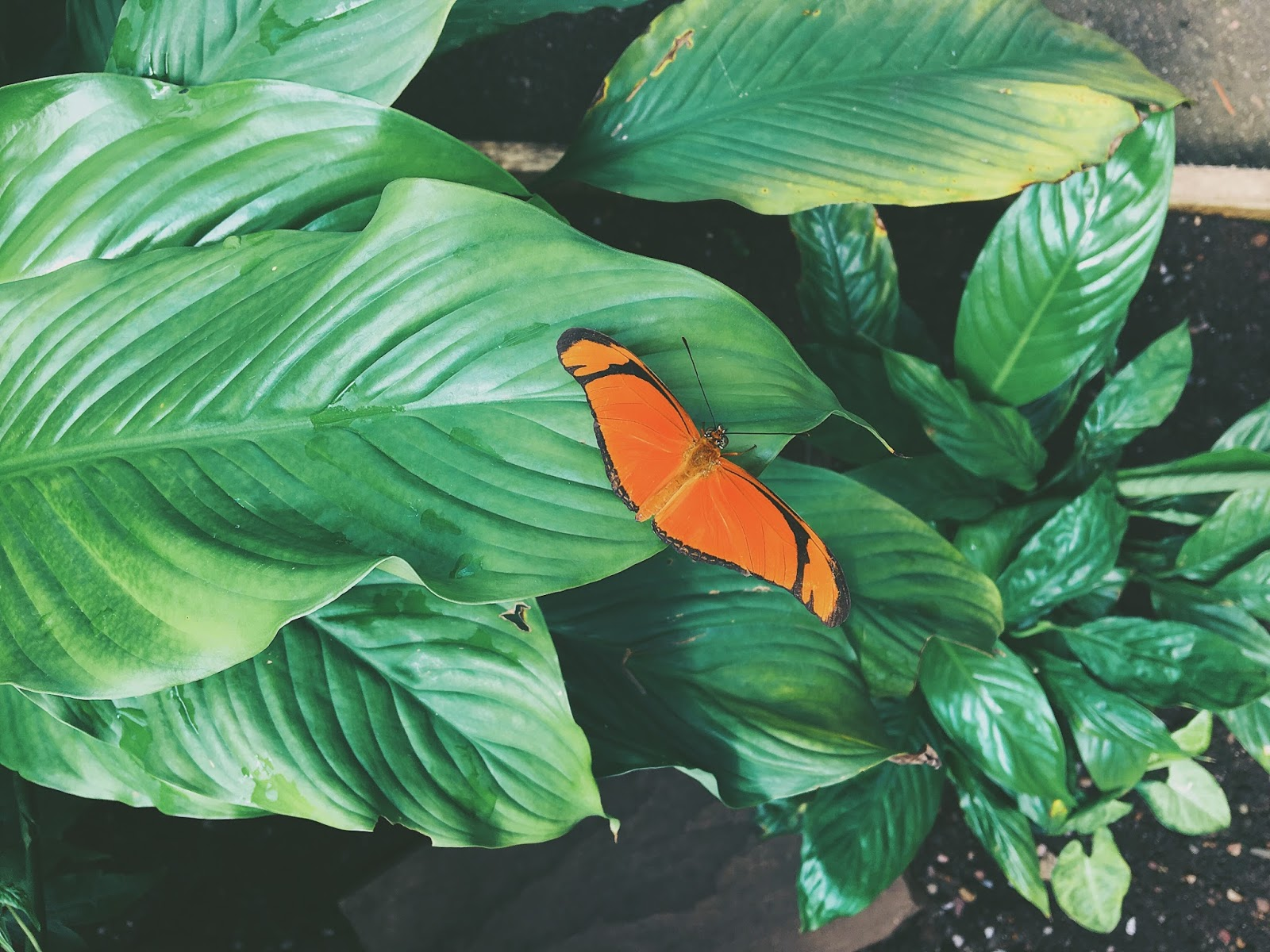 orange butterfly on leaves