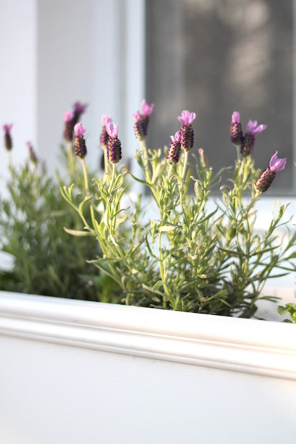 How to make window boxes, adding character to your home