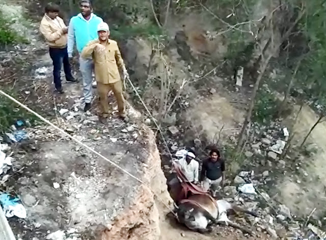 The cow fell into the pit in Ballabhgarh for 7 days, the video of the rescue work is getting viral