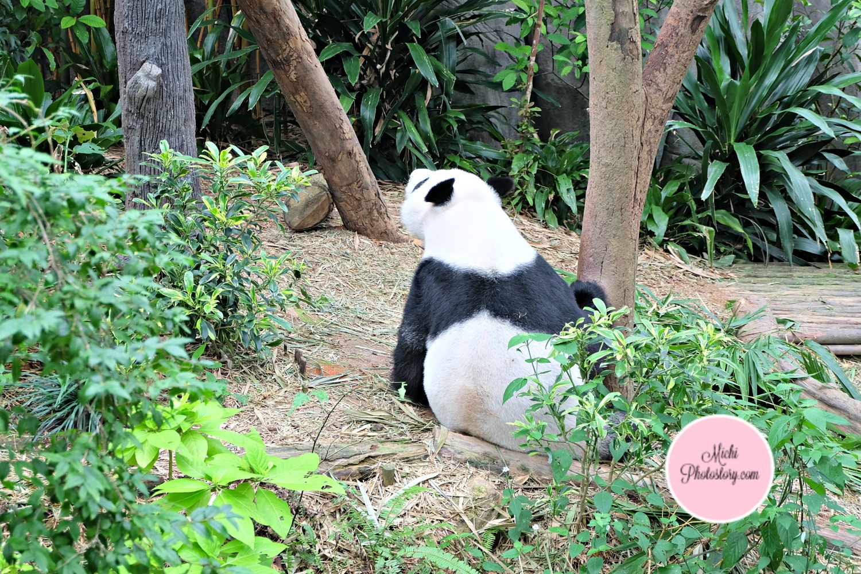 wwf panda forest - photo #11