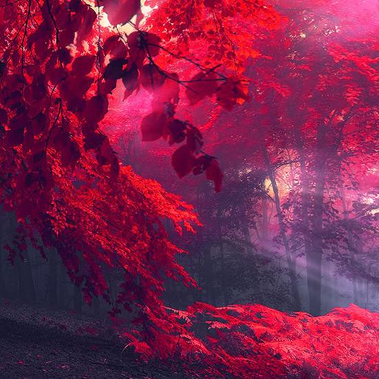 Autumn Forest Wallpaper Engine