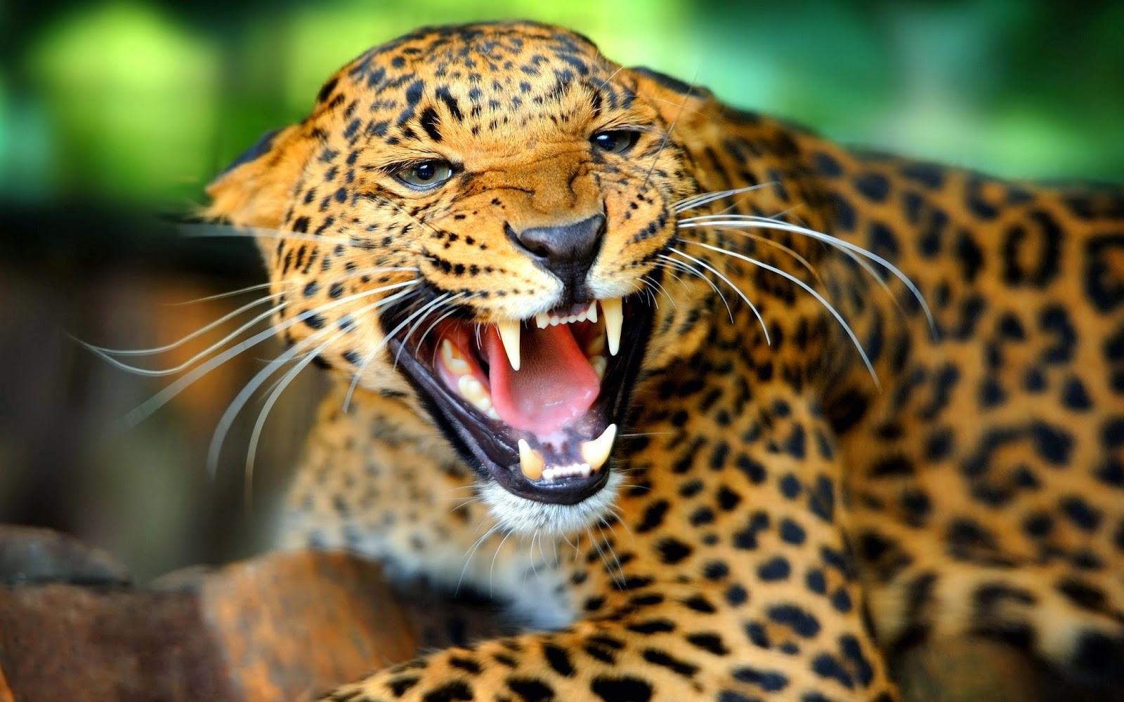 Digital Leopard Art Wallpaper