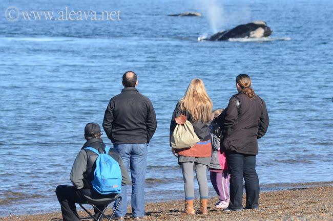 Avistaje de ballenas en El Doradillo